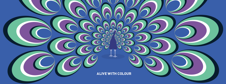 Alive with colour - banner pavone